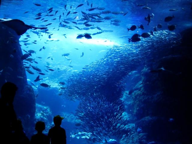 水族館婚活とは?