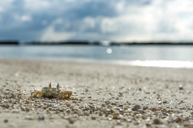 海外の海を表すイメージ